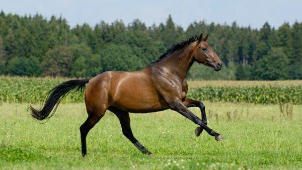 Soñar que intetamos montar un caballo