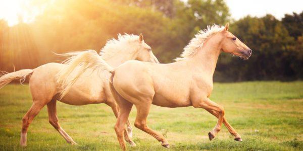 caballos-en-sueños-significado