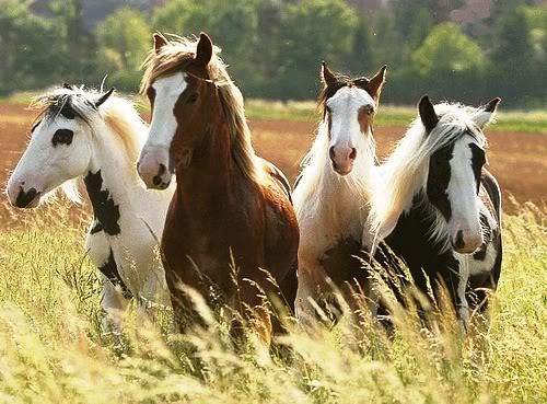 soñar manada caballos