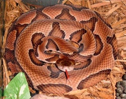 sueño serpiente