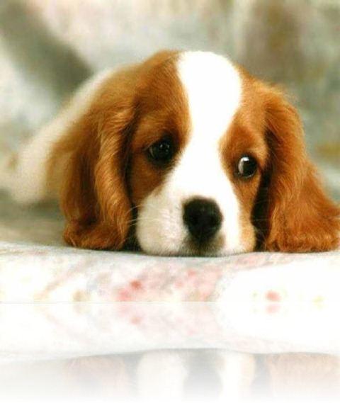 tarot-interpretacion-de-suenos-sonar-con-perros
