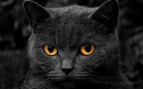 soñar-con-gatos-significado
