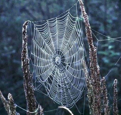 Soñar con una araña tejiendo su tela: