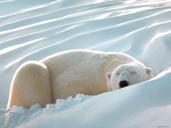 significado-soñar-con-osos