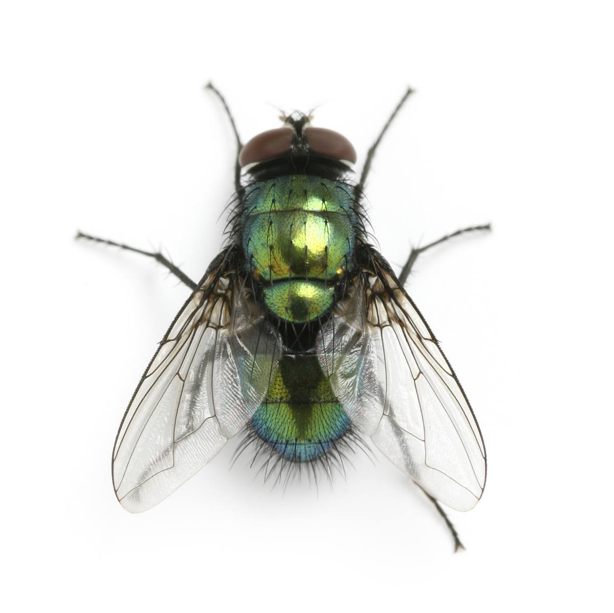 los-sueños-con-moscas