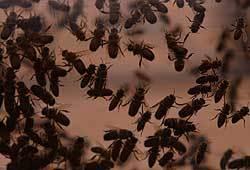 soñar-con-moscas-que-te-persiguen