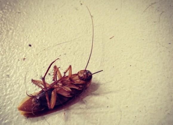 soñar-que-matamos-cucarachas