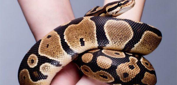 pelea-con-una-serpiente-sueño-significado