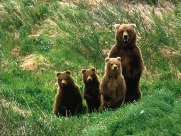 soñar-con-un-oso-en-el-bosque-o-en-un-lugar-conocido