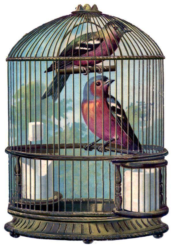 Soñar con pájaros en una jaula