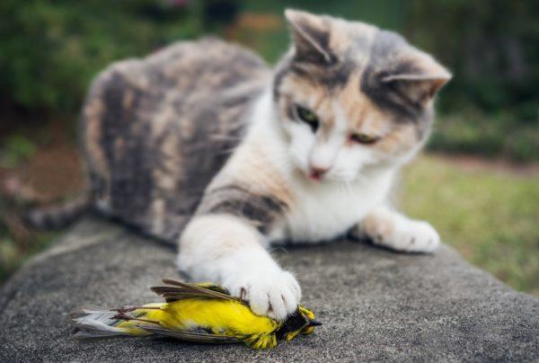 Soñar que cazamos pájaros