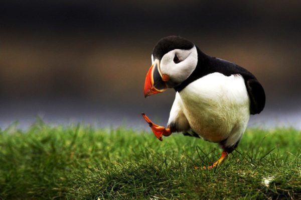 Soñar que damos de comer a un pájaro
