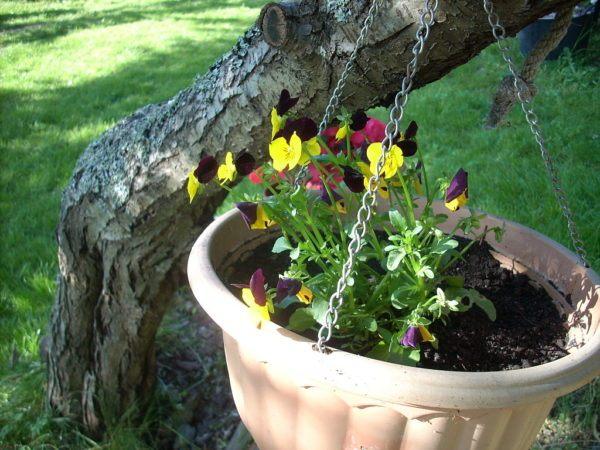 plantas-de-la-magia-verde