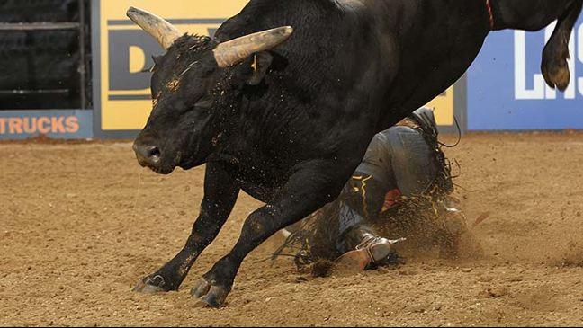 que-significa-sonar-con-toros-si-los-toros-nos-persiguen