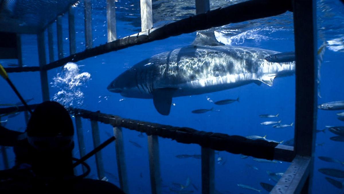 soñar-que-estamos-frente-a-un-tiburon