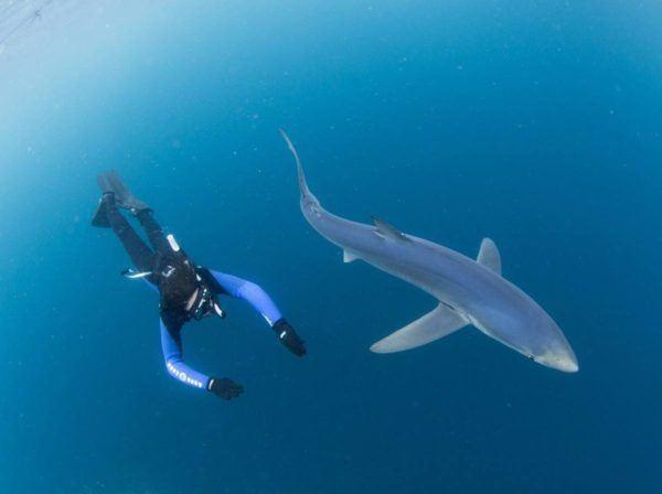 soñar-que-nadamos-junto-a-un-tiburon