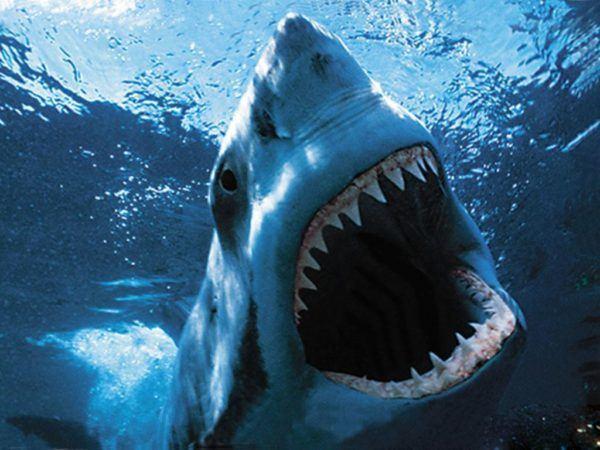 soñar-que-un-tiburon-nos-ataca