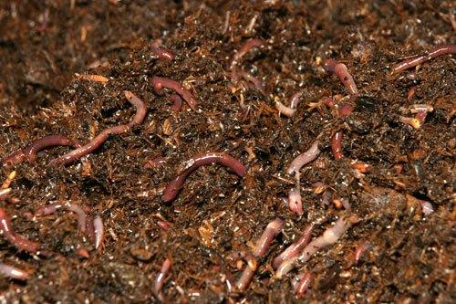 soñar-con-gusanos-en-el-suelo