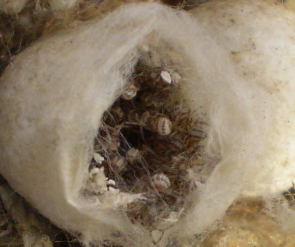 soñar-con-un-nido-de-arañas