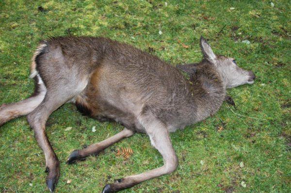 soñar-con-un-animal-muerto