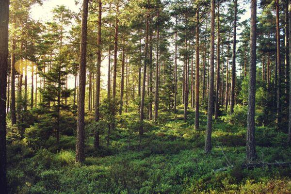 Soñar con bosque