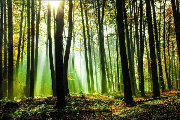 Soñar con estar tranquilos en un bosque