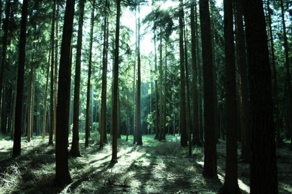 Soñar con un bosque significado