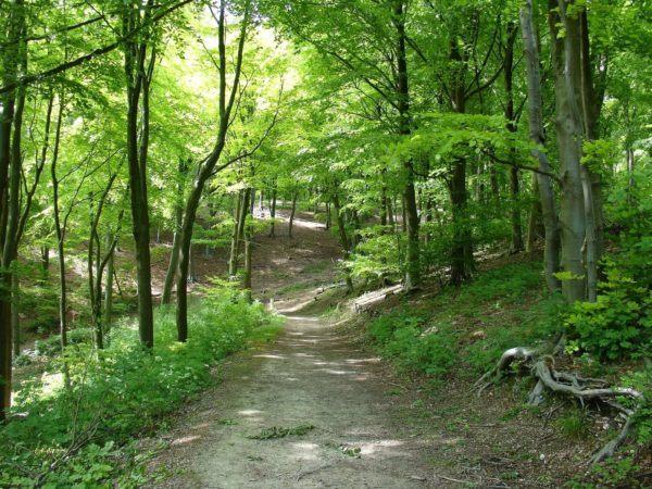 Soñar que nos perdemos en un bosque