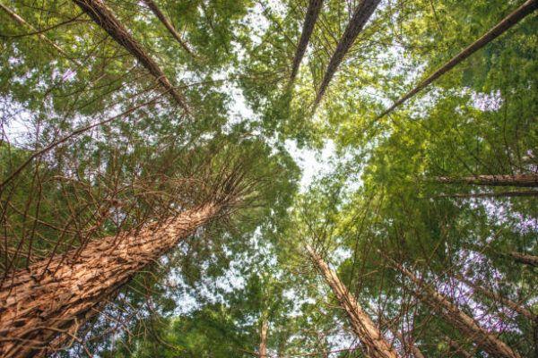 Soñar con un bosque