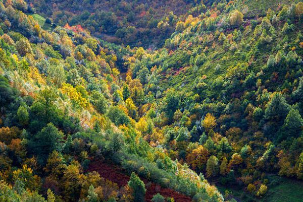 Soñar un bosque