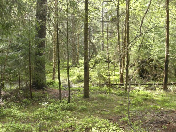 soñar con un bosque sin arboles