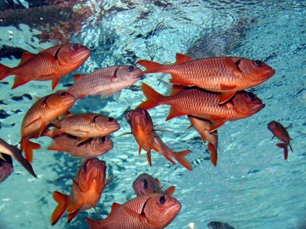 significado-soñar-peces
