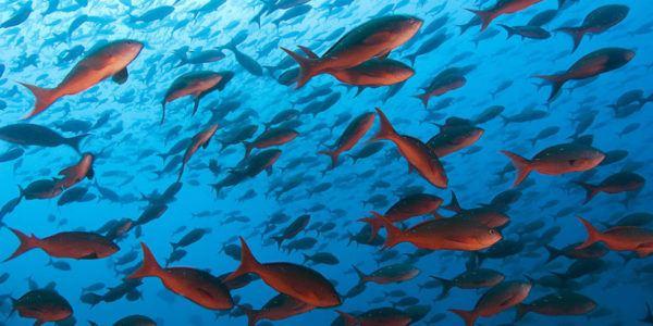 soñar-peces-significado