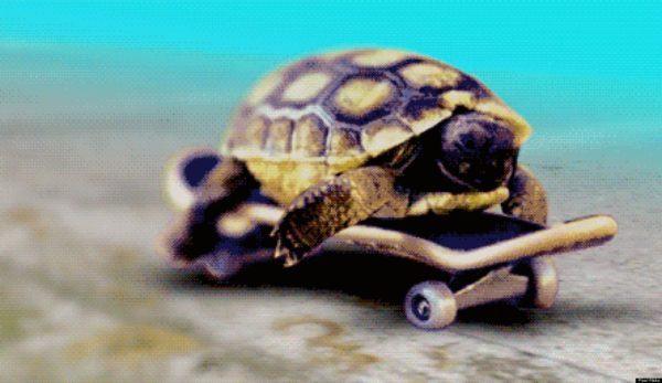 soñar-con-una-tortuga-en-movimiento