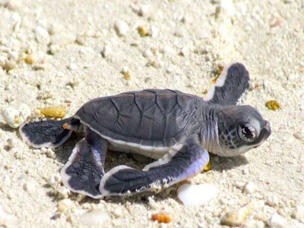 soñar-tortugas-significado