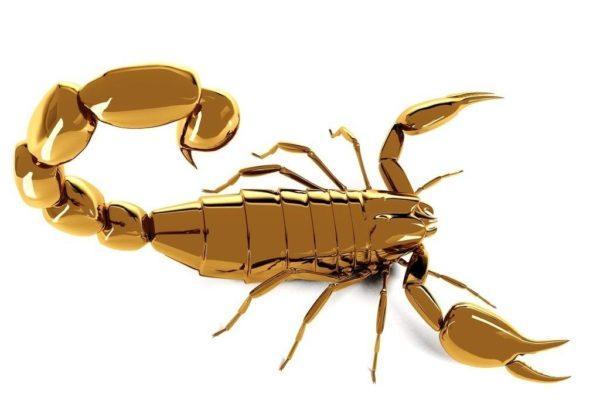 El escorpion contra las picaduras