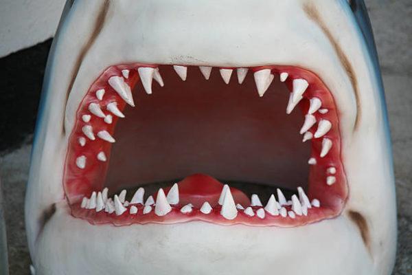 Buena suerte amuletos y talismanes diente tiburon