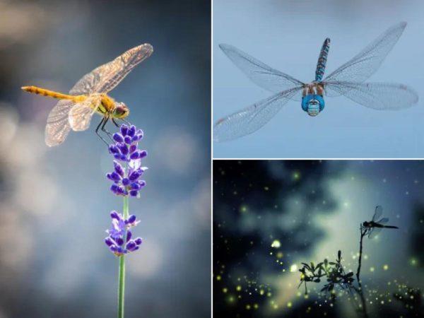Significado espiritual de la libélula