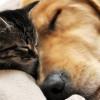 Soñar con animales | significado