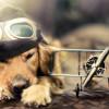 Que significa soñar con perros