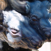 Horóscopo Chino 2009: El año del Búfalo