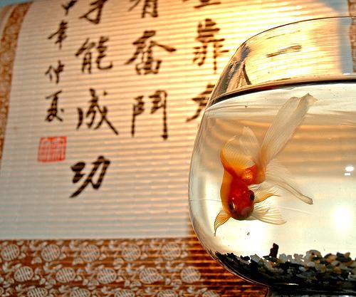 Feng shui y el dinero iii - Feng shui para el dinero ...