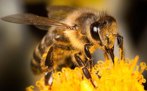 que-significa-soñar-con-abejas