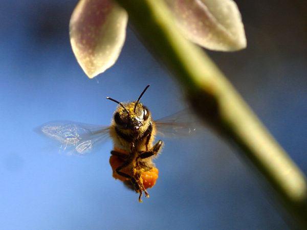 soñar-que-matamos-abejas