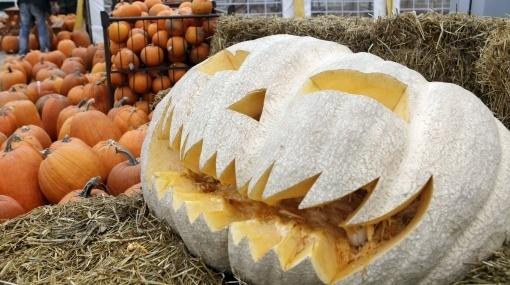 halloween-y-su-simbolo-la-calabaza-mercado-de-calabazas