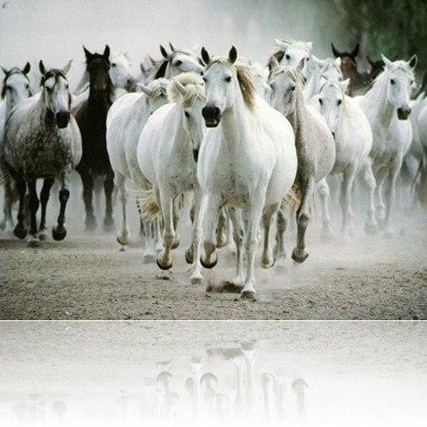 sonar-caballos