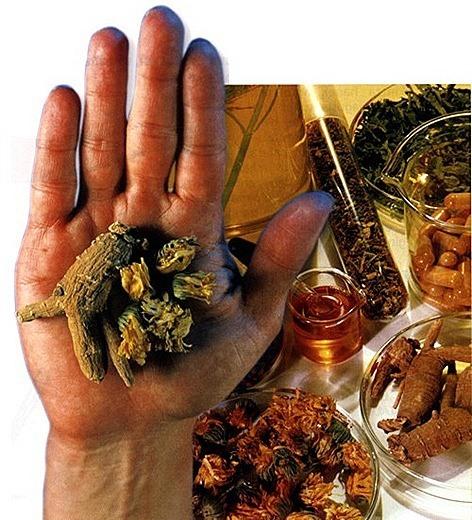 homeopatia4