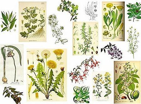 plantasmedicinales_thumb