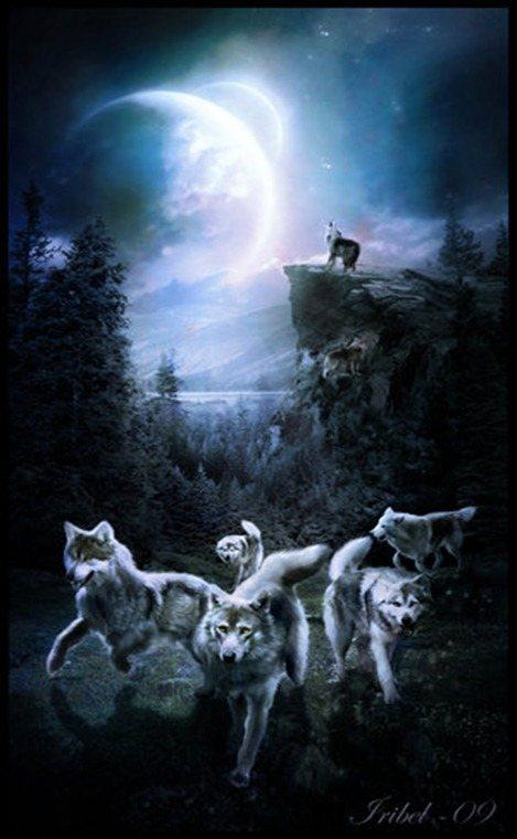 dream-wolves