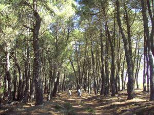 pinar fradelo